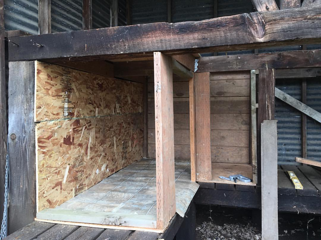 Inside wall and supports-Building a Chicken Coop