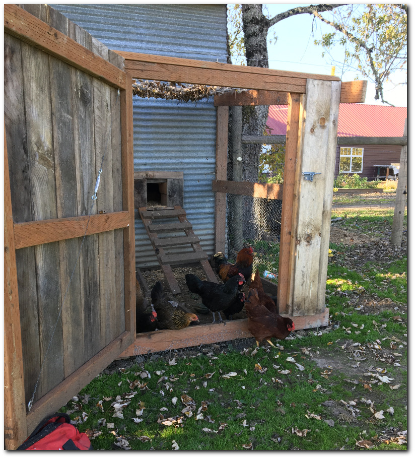 Chicken run made with old barn wood