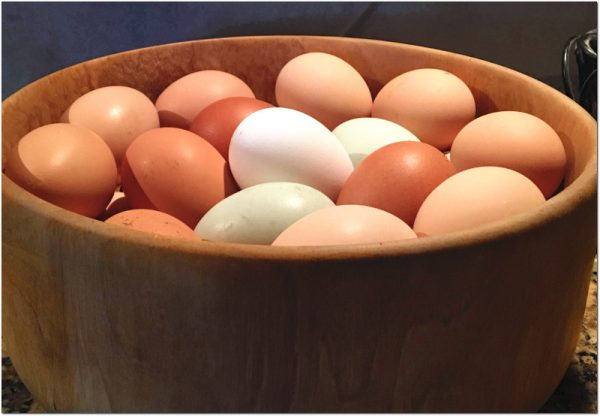 Farm Fresh Eggs Jefferson Oregon